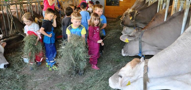 Die Kindergärtler zu Besuch auf dem Bauernhof