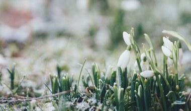 Teaserbild für den Artikel Spirituelle Impulse in der Fastenzeit