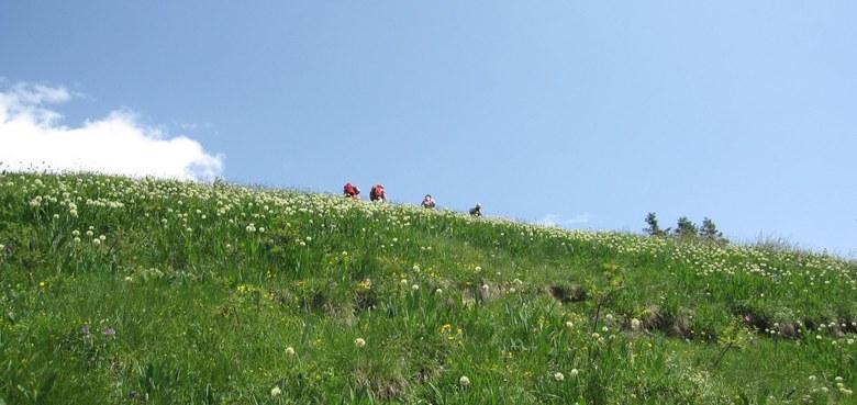 Alpmesse auf der Staufenalpe