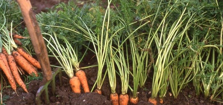 Gesunder Boden - gesunde Pflanze