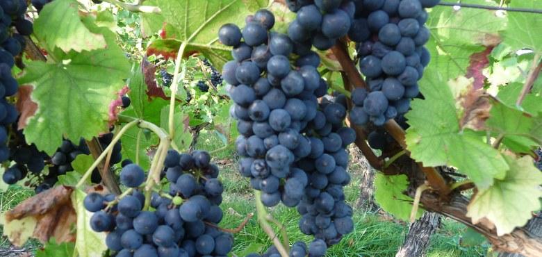 Wein in der Bibel - mit Dr. Markus Hofer