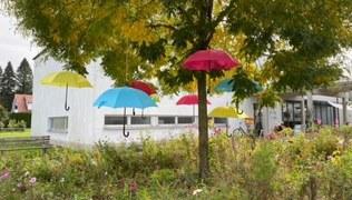 Vorschaubild Schirme im Baum