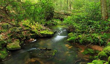 Tesaserbild für den Artikel Garten Eden Gottesdienst