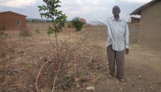 Vorschaubild Ländle Christbaum 2019 - Aufforstungsprojekt in Malawi
