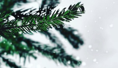 Teaserbild für den Artikel Von drauß' vom Walde