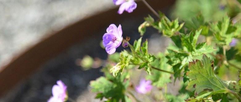 Teaserbild für den Artikel Durch die Blume