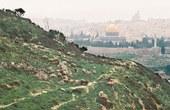 Photo: Voitec/Schafherde vor den Toren Jerusalems