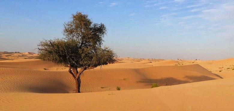 Der Weg in die Freiheit führt durch die Wüste