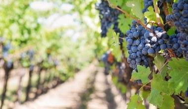 Teaserbild für den Artikel Woher der Wein kommt