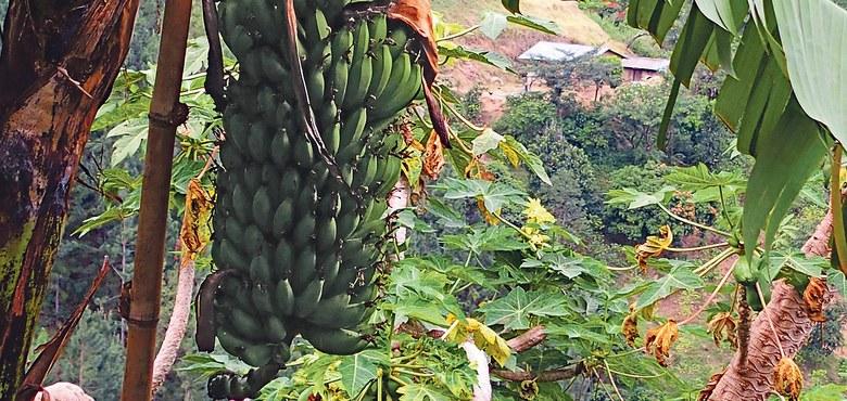 Sonntagslesungen: Im Weinberg und auf dem Bananenfeld