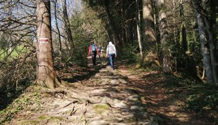 Vorschaubild Besinnungswege in Vorarlberg - Teil 1 der Serie