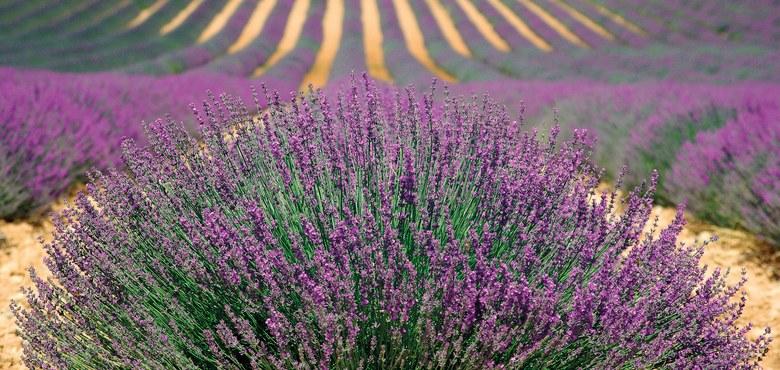 Provence – Lavendel, Sonne und viel Meer mit Walter Buder