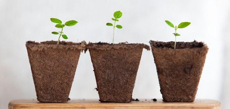 Atelier 30: Kirche, das kann man pflanzen