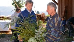 Vorschaubild Palmbuschbinden