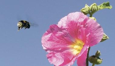 Teaserbild für den Artikel Blühe, wo du gepflanzt bist