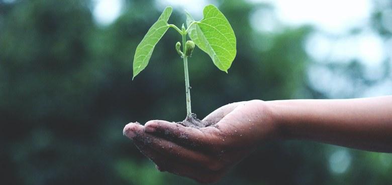 Gemeinsam Zukunft pflanzen