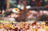 Photo: autumn mott on unsplash.com
